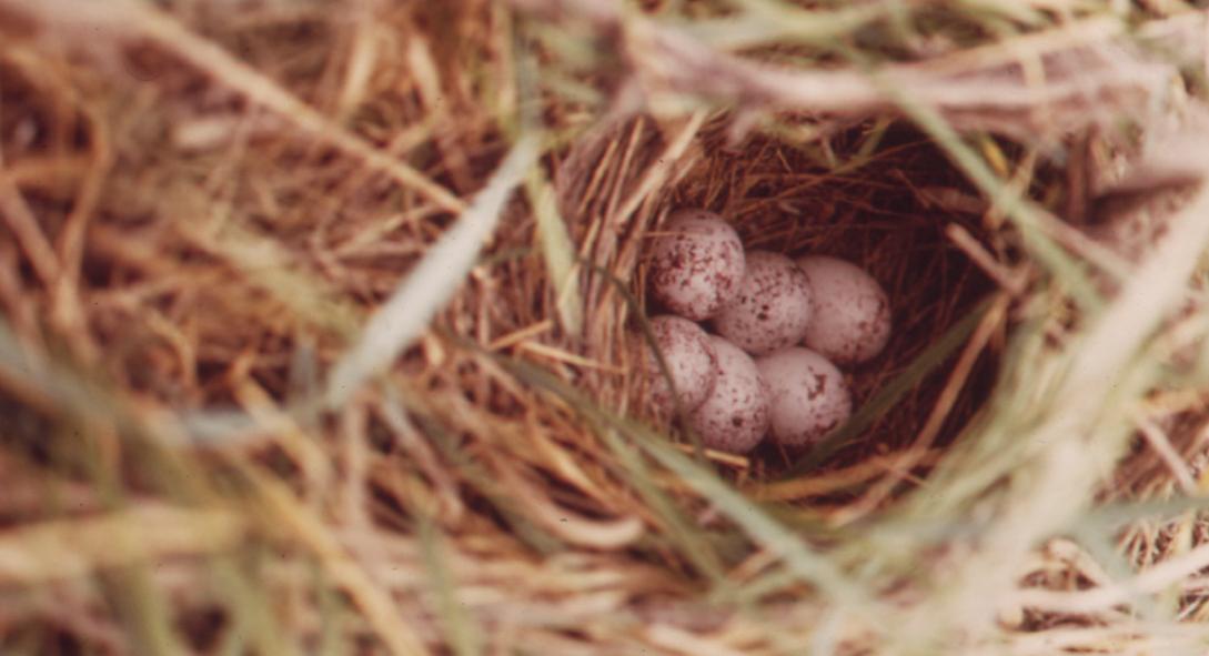 Eggs Banner 3